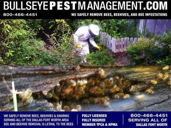 Bee Removal in Fort Worth Texas - Bullseye Pest Management Owner / Operator Steve Moseley inspects a bee infestation in a Fort Worth Residence.