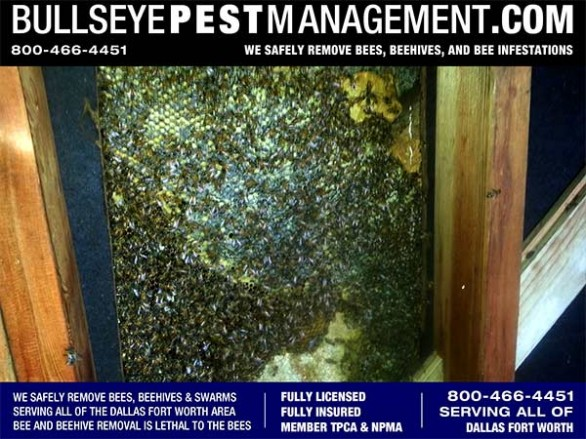 For Bee Removal in Dallas get the best service from Bullseye Pest Management at 800-466-4451