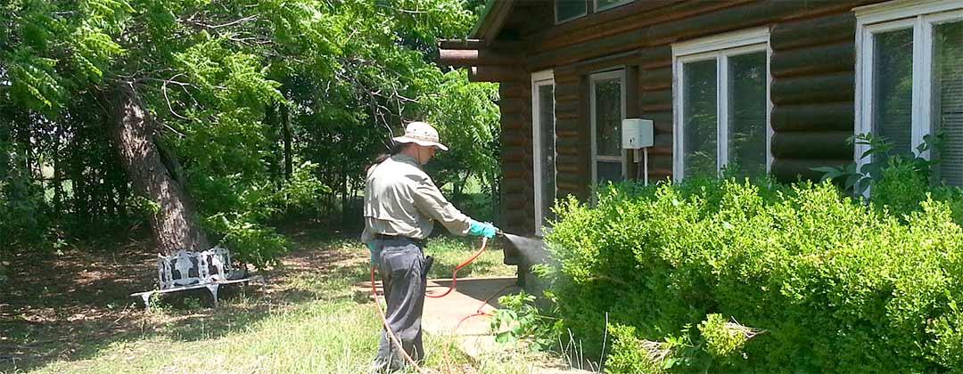 Carpenter Ants Dallas