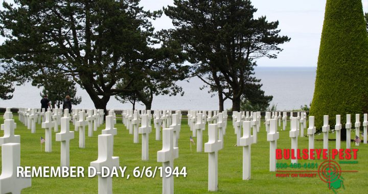 Bullseye Pest Remembers D-Day, June 6th, 1944