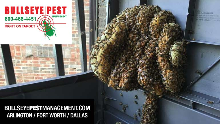 Bee Removal Arlington Dallas Fort Worth