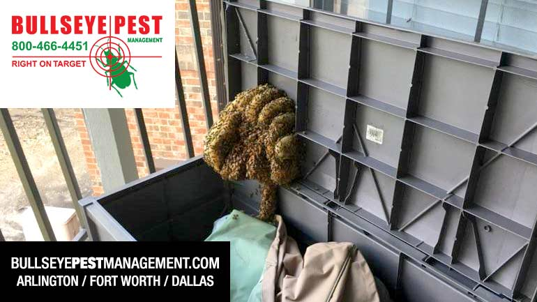 Bee Removal Arlington Fort Worth Dallas
