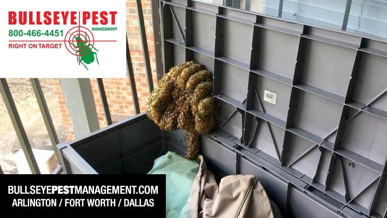 Bee Removal Arlington Fort Worth Dallas