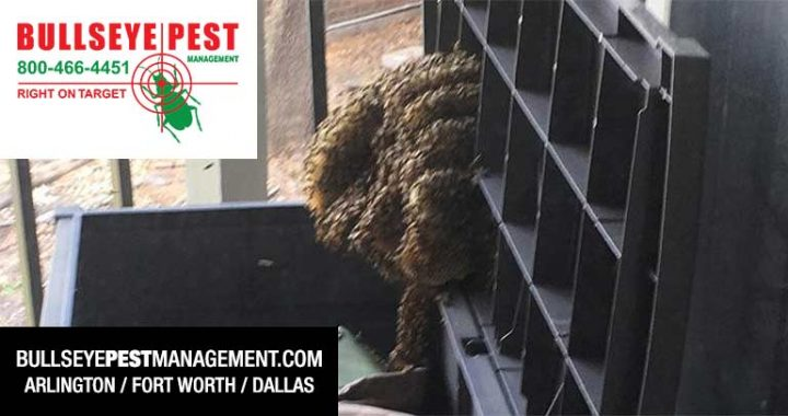 Bee Removal Dallas Fort Worth Arlington