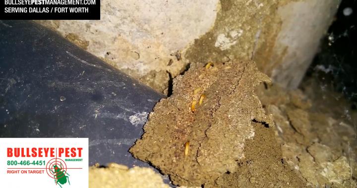 Bullseye Pest Management Termite Video Thumbnail
