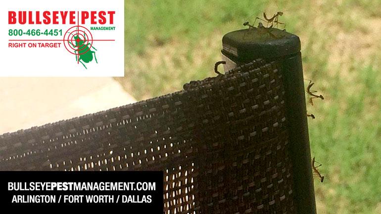 Bullseye Pest Managment Arlington Pest Control Near Me