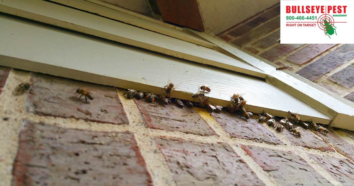 Bee Removal Arlington Bullseye Pest Managment