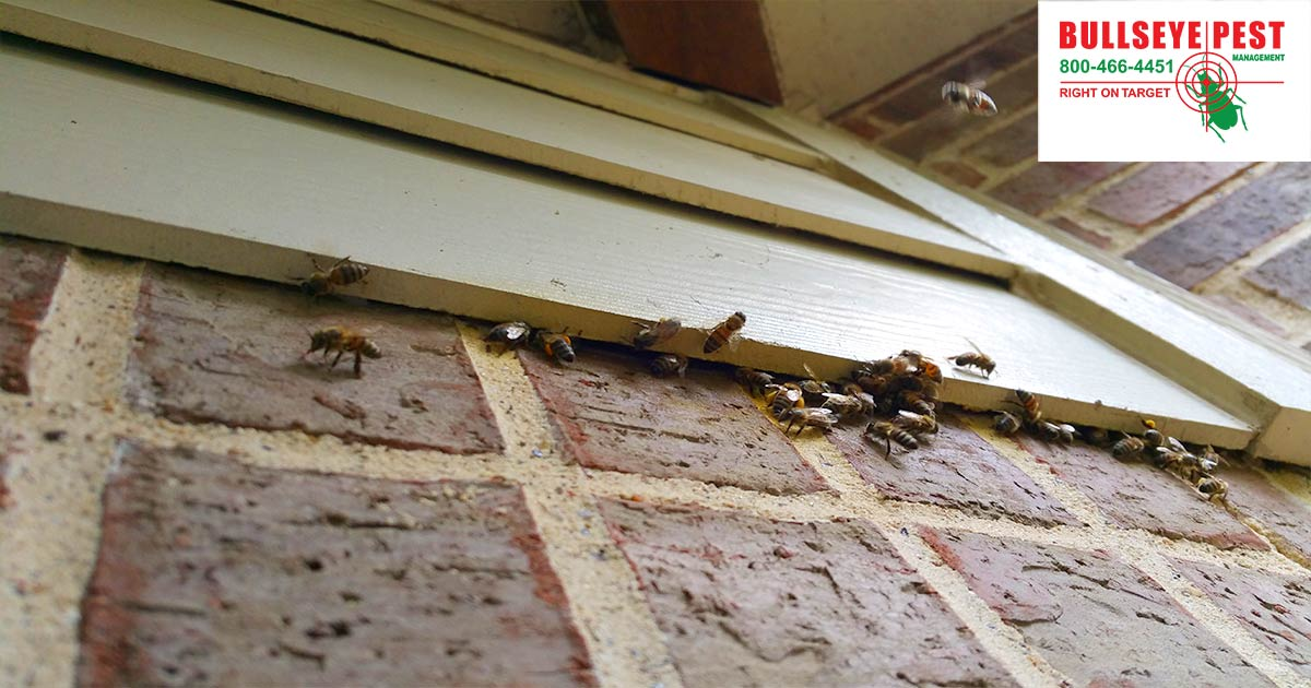 Bee Removal DFW Bullseye Pest Managment