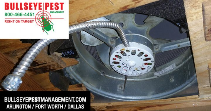 Bullseye Pest Exclusion Work Attic Fan Before